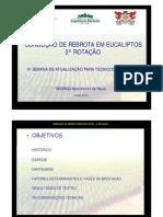 conducao_rebrota_eucalipto