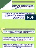 5 Transporte de Eletrons e Sintese de Atp