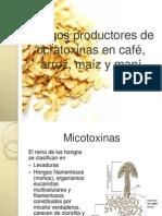 Hongos productores de ocratoxinas en café, arroz