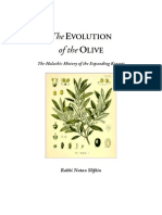 The Evolution of t the Olive