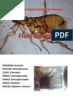 Specimen Reviewer (Field Bio)