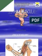 fisiologa-muscular2939
