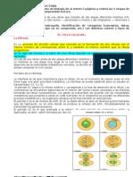 Biologia Division Celular 09 (1)