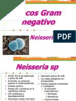 19.Cocos Gram Negativo