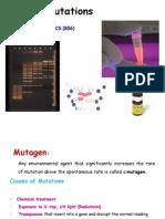 Molecuar Genetics 8.2012