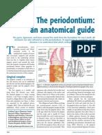 Anatomical Guide Periodontium