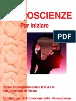 Neuroscienze - Il Cervello