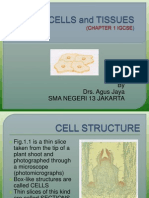 Cells and Tissues (Igcse Ch 1)