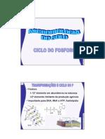 FITOPATOLOGIA Micorrizas