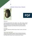 arthopoda