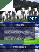 Intoxicação de bovinos por aflatoxina B1 presente emmk