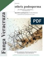 131_Gyrothrix podosperma
