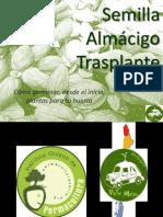 Semillas, Almácigo, Trasplante