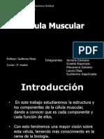 Célula muscular