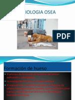 2. Fisiologia Osea 2a Parte (1)