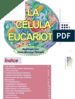 la-celula-eucariota-1201088392425316-4