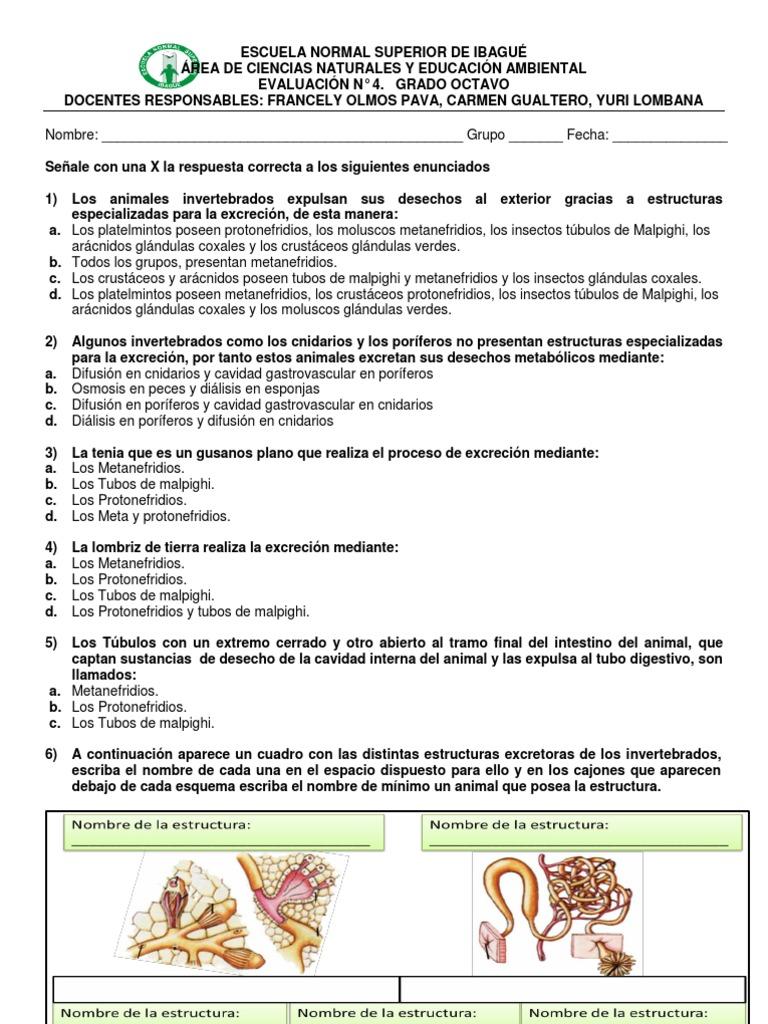 Evaluacion 4 Excrecion En Invertebrados Y Vegetales Zoologia