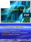 12 Digestive Glands