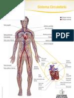 Corpo Circulatorio