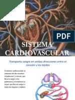 Deber Cardiovascular