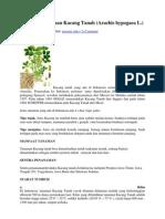Budidaya Tanaman Kacang Tanah