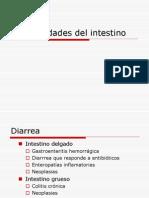 Enfermedades Del Intestino Medicina Veterinaria
