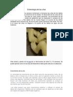 Embriología de las uñas
