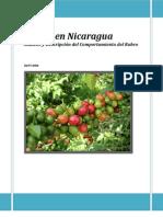 Cafe Nicaragua