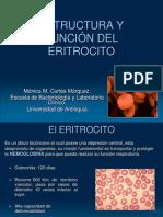 Eritrocito1