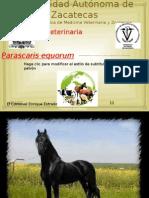 PARASCARIS EQUORUM. 2