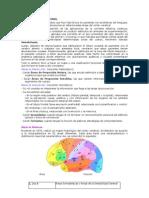 Áreas  cerebrales