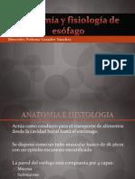anatomayfisiologadeesfago-100912184754-phpapp01