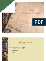 bt 101 brain