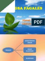 BANGSA FAGALES