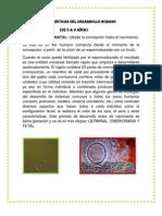 CARACTERISTICAS DEL DESARROLLO DEL NIÑO DE 0 A 6 ANÑOS
