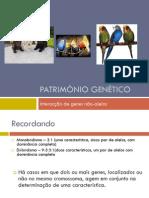 Património Genético (Interacção génica, Periquitos