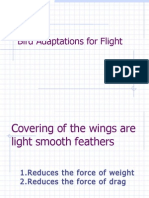 Bird Adaptations for Flight