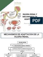 Injuria Renal Alumnos