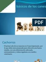 Cuidados básicos de los canes