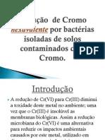 Redução  de Cromo hexavalente por bactérias isoladas (1)