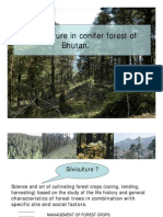 Conifer Silviculture