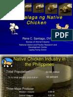 Pag-Aalaga Ng Native Chicken