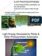 Photosynthesis - Huss