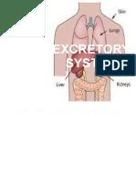 Excretory System
