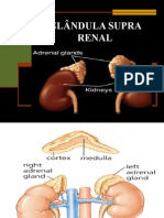 Glandula Supra Renal