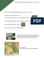 Brassicaceae + sintomas doenças