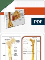 musculo-esqueletico