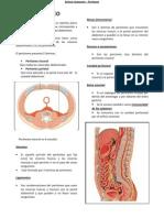 Peritoneo Drake 110516143452 Phpapp02
