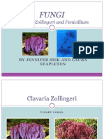 Clavaria Zollingeri -- Power Point