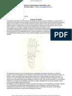 Anatomia Tobillo Pie